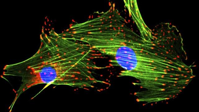Cell Biology home - Medizinische Universität Innsbruck