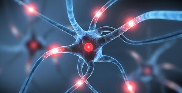 was ist neurowissenschaft wien umgebung